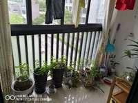 6中 百鸟亭学区江南新城南区 百鸟亭小学 菜市场一路之隔 小区环境好 生活便利