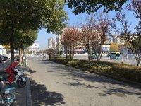 江南新城 朝南沿街店面超高性价比 可隔两层使用 买到就是赚到
