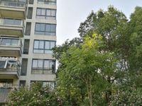 名人之家 朝南对着公园 3室2厅2卫 113万 双学区