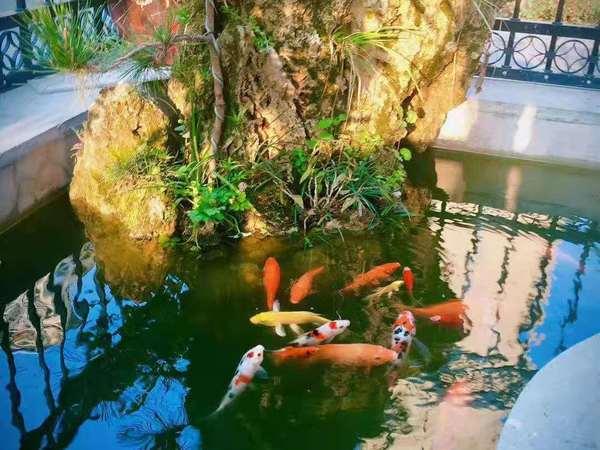 阳湖片区御景佳苑,精装修两房,一楼带院子养花种菜极好