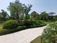 市中心豪华小区柏悦山,真正的富人区,小区环境幽美,楼间距大采光极好,随时看房